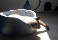 Como convencer e adaptar seus gatos ao novo lar
