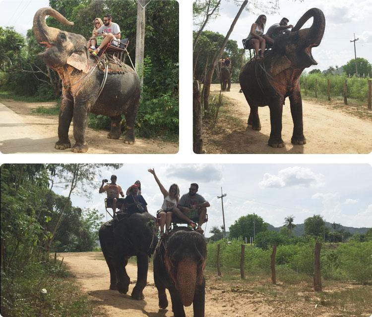 bangk_elefantes